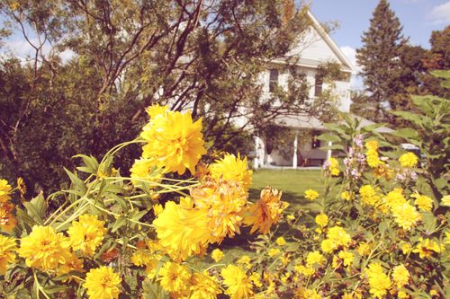 Flowers&house